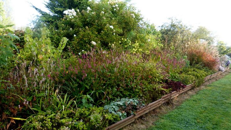 Le jardin de Cassandra - Page 2 P1320545