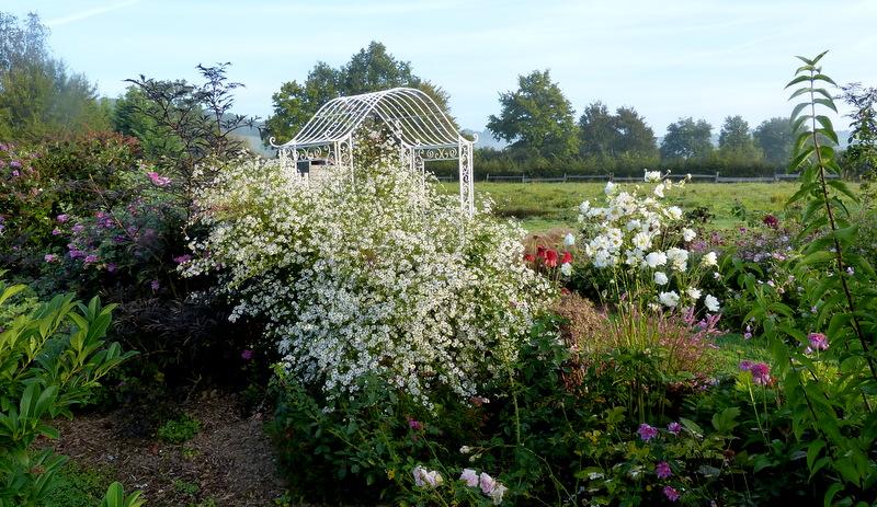 Le jardin de Cassandra - Page 2 P1320547
