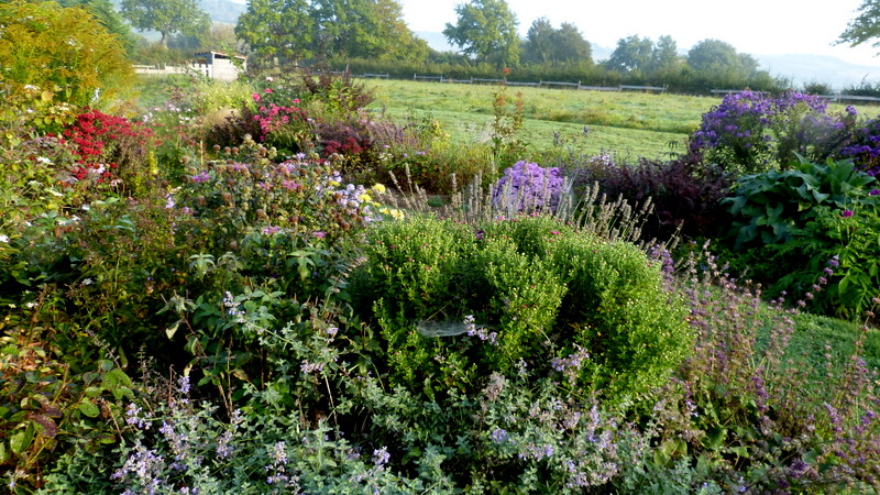 Le jardin de Cassandra - Page 2 P1320548