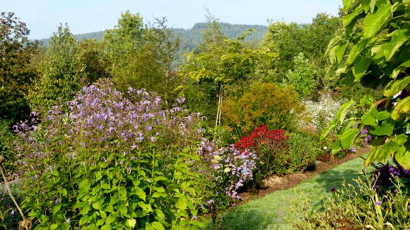 Le jardin de Cassandra - Page 2 P1320551