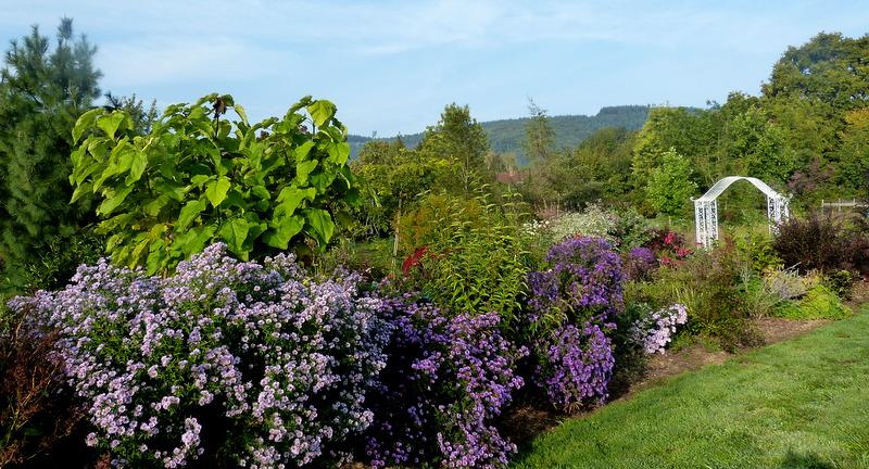 Le jardin de Cassandra - Page 2 P1320621