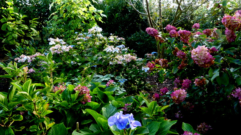 Le jardin de Cassandra - Page 2 P1320623