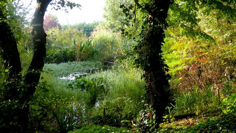 Le jardin de Cassandra - Page 2 P1320710