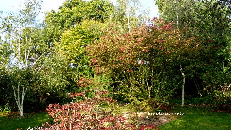 Le jardin de Cassandra - Page 2 P1320712