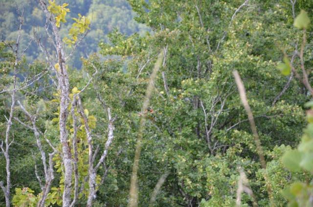 l'ACI dans le Doubs Dsc_0619