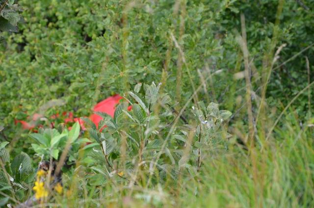 l'ACI dans le Doubs Dsc_0624