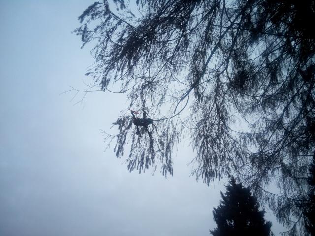 un petit vol de Noël Img_2111