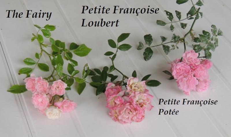 Petite Françoise versus The Fairy 2014_735