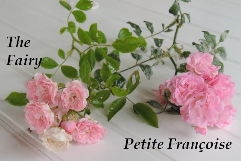Petite Françoise versus The Fairy 2014_736