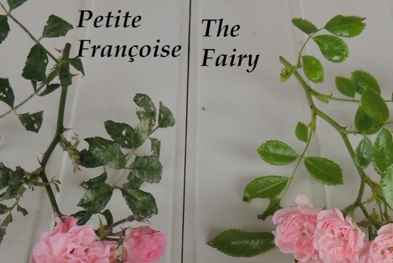 Petite Françoise versus The Fairy 2014_737