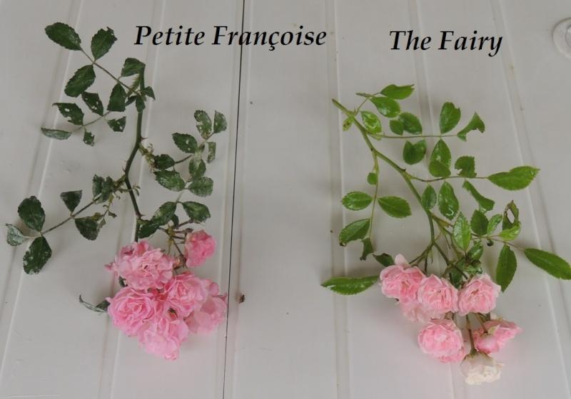 Petite Françoise versus The Fairy 2014_739
