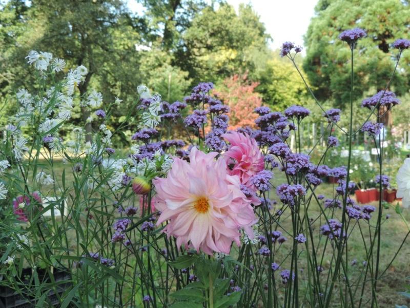 Foire aux plantes abbaye d'aywiers  3-4-5 octobre 2014_927