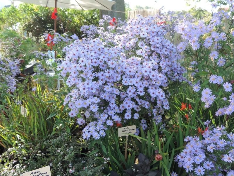 Foire aux plantes abbaye d'aywiers  3-4-5 octobre 2014_930