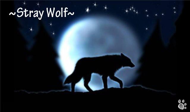 ~~~Stray Wolf~~~