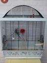 Nouvelle cage. Dscf3214