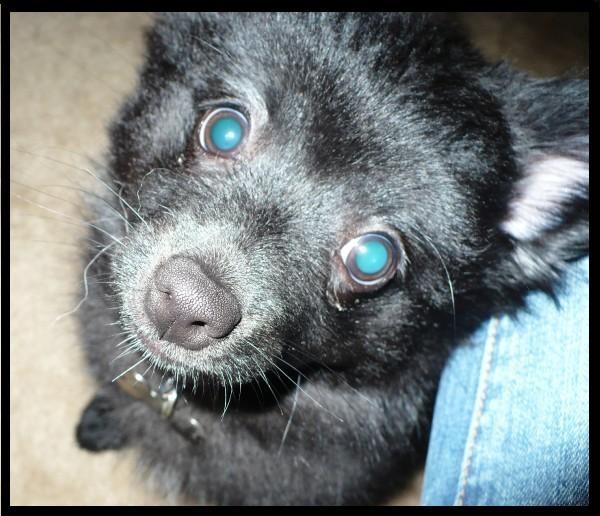 Pets Blue_b10
