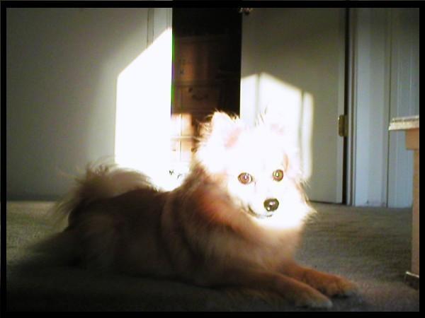 Pets Fox_bm10
