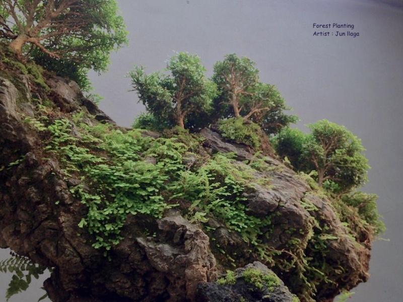 Dwarf Murraya Landscape. 10405510