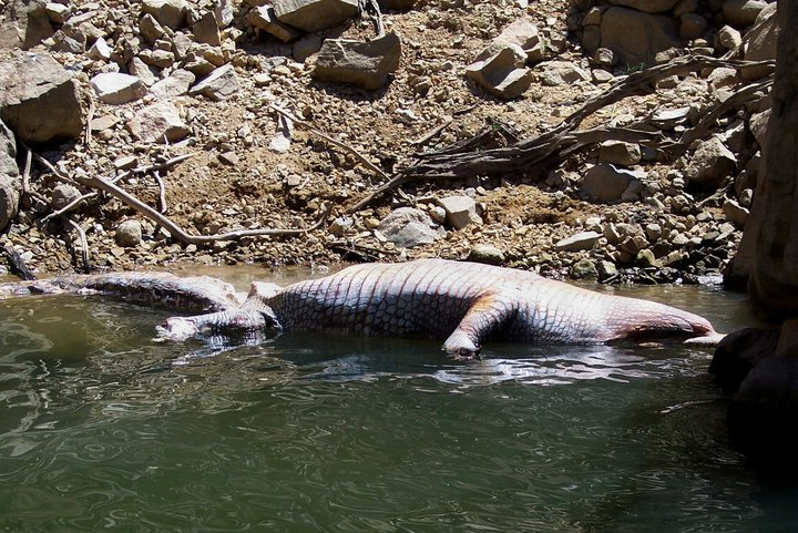 Never Know What You'll Run Into at Lake Agua Milpa 30834_10