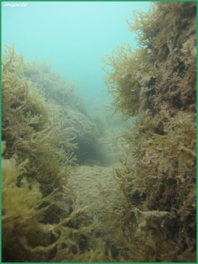 mes plongées en image  Cayon10