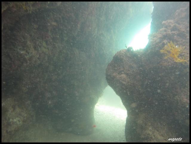 mes plongées en image  Dadale10