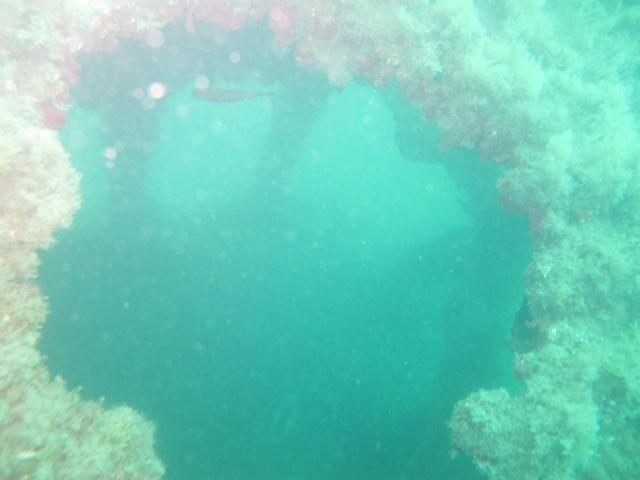 mes plongées en image  Img_3519
