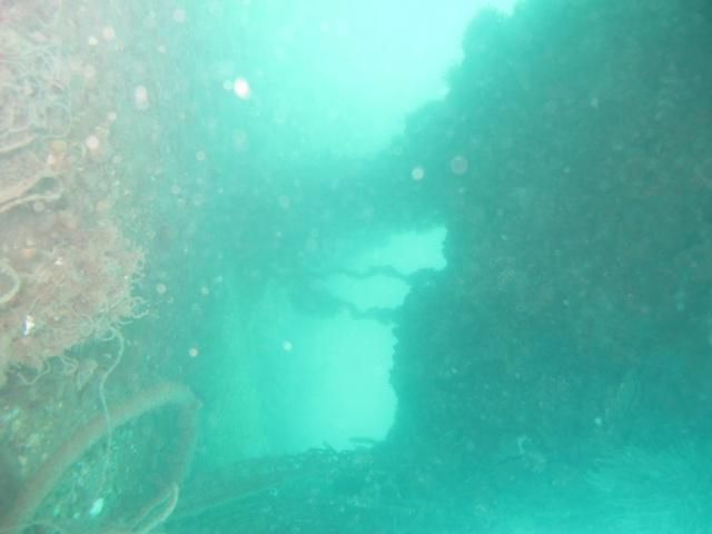 mes plongées en image  Img_3522