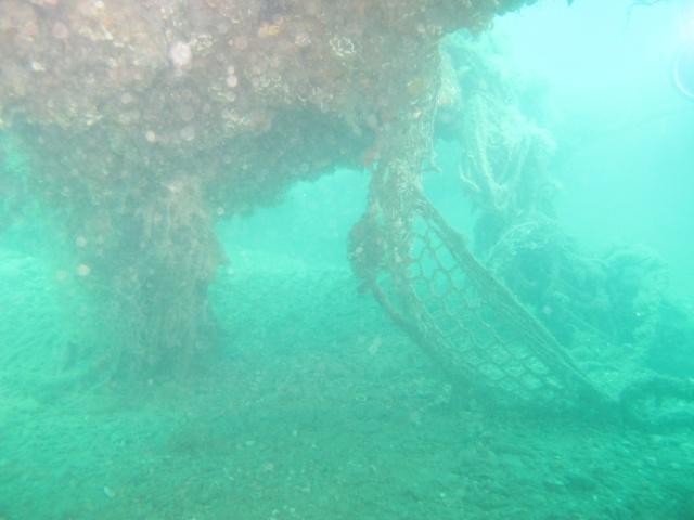 mes plongées en image  Img_3523