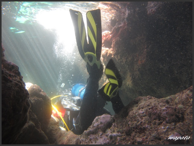 mes plongées en image  Palmes10
