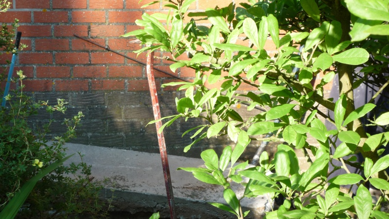 Abri de jardin/Annexe atelier P1010922