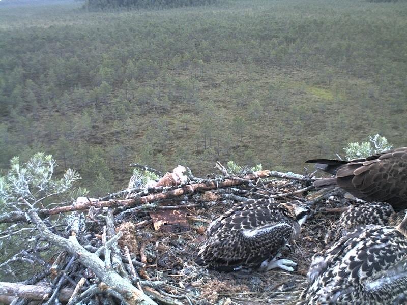 Latvian Osprey Nest ~ 2014 ~ Pērkons & Lauma - Page 40 2014-758