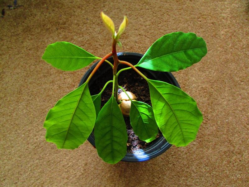 Наши домашние растения - Страница 2 Img_3713