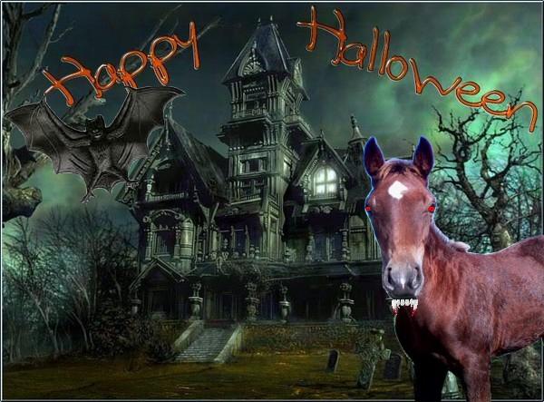 CONCOURS PHOTOS : Halloween chez les chevaux Concou10