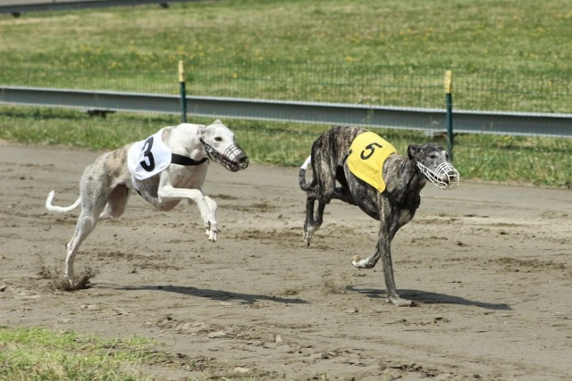 PM Toulouse -22/06/2014 Galgos10