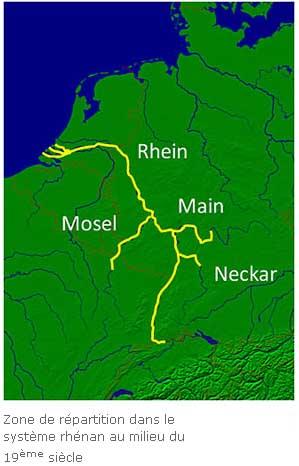 retour des aloses dans la Moselle ! Alose_10