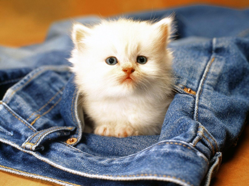 Images Animaux  - Page 15 Tout-m10