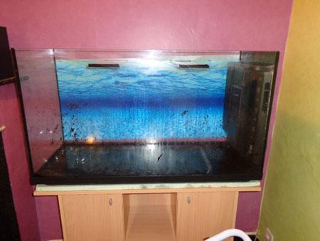 Mon aquarium de 200L Aquari11