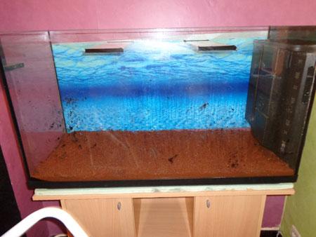 Mon aquarium de 200L Aquari12