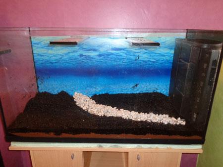Mon aquarium de 200L Aquari13