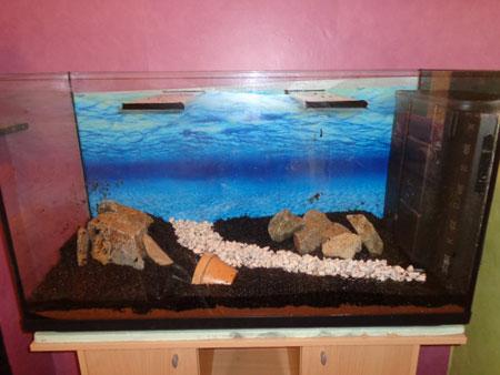 Mon aquarium de 200L Aquari14