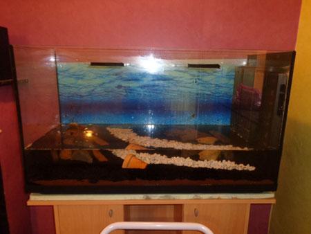 Mon aquarium de 200L Aquari15