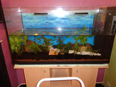 Mon aquarium de 200L Aquari16