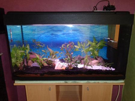 Mon aquarium de 200L Aquari17
