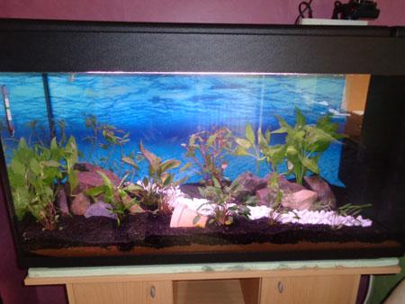 Mon aquarium de 200L Aquari18