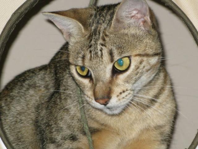Cliquez pour nos chats sur Actuanimaux ! - Page 4 Imagin11