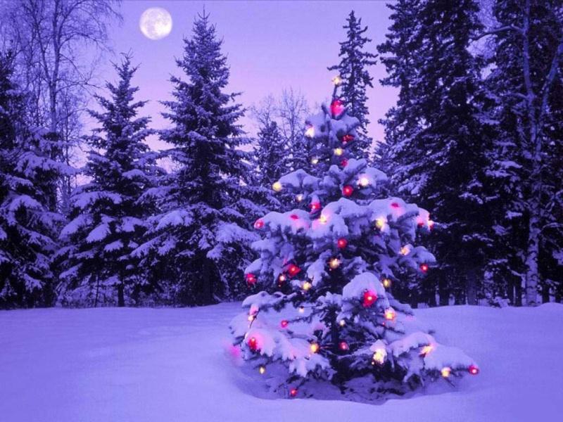 Bonjour du 19 décembre Anguil10
