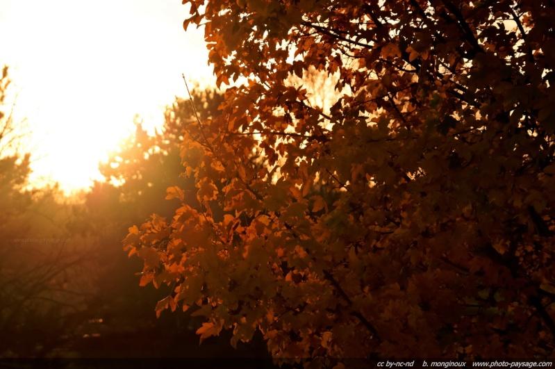 bonjour octobre... Lumier10