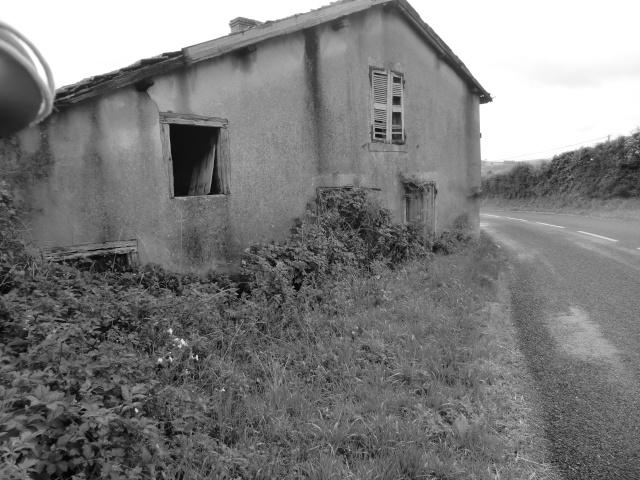 noir et blanc dilan  Cimg6742