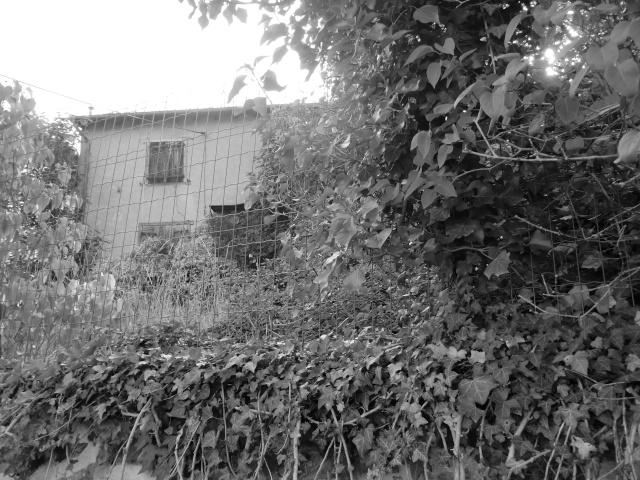 noir et blanc dilan  Cimg6810