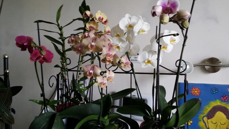 dernières floraisons maison 20140710